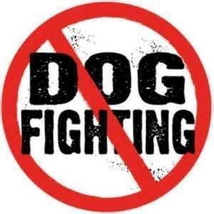 Animal Abuse: Solutions - Animal Abuse: A Problem That